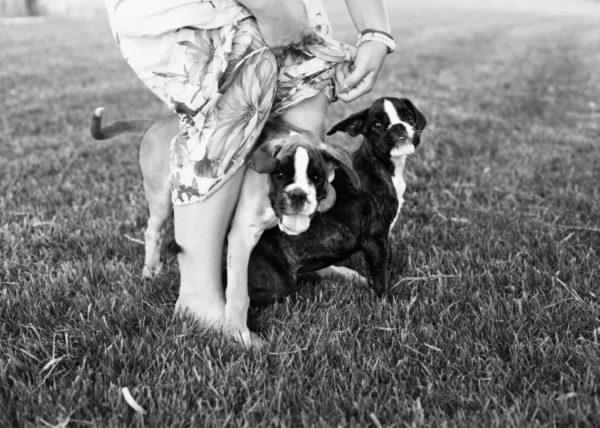 Album fotografico di animali domestici