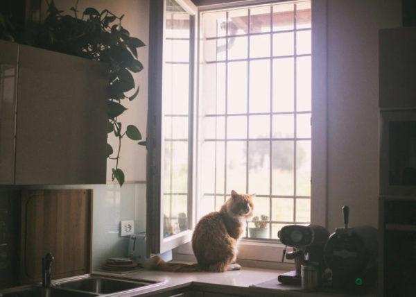 Fotografo professionale di gatti